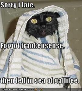 funny-pictures-late-wet-wiseman-cat