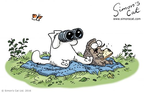 Simon's Cat bird-watching with a hedgehog.
